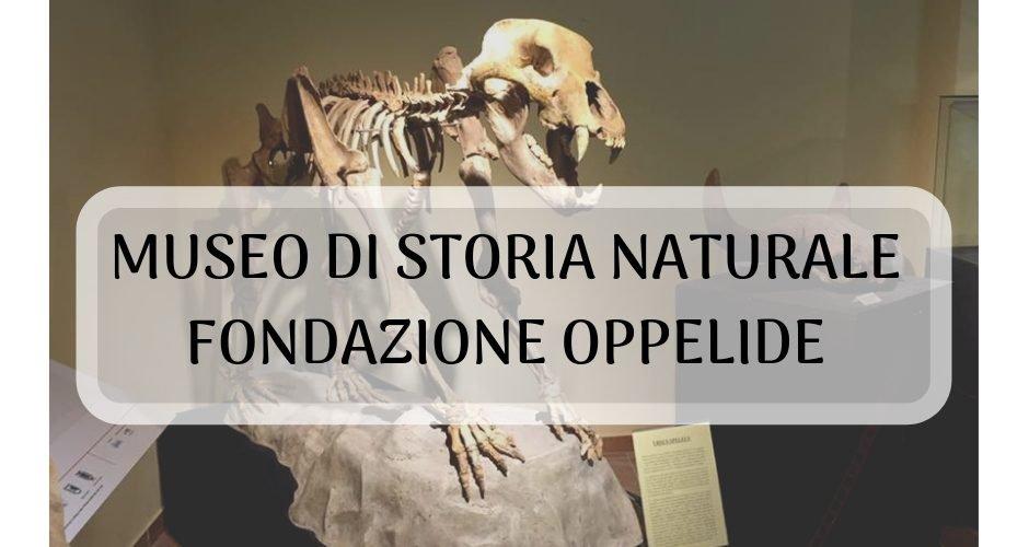 museo di storia naturale di gagliole fondazione oppelide
